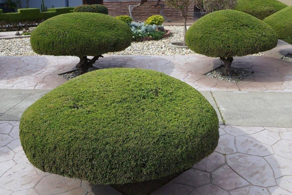 short circular trees