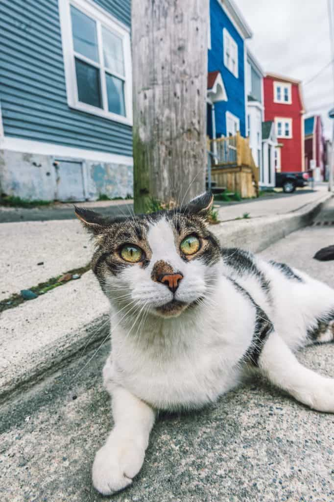 white cat with gray stripes laying on a concrete road in front of colorful houses