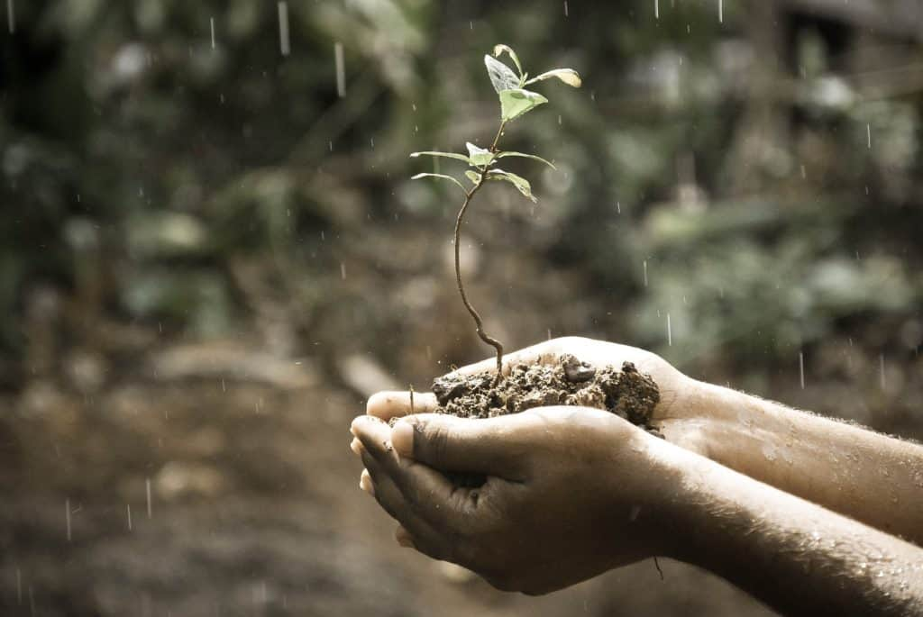 hands holding soil and a plant with rain dropping around and a blurred nature background