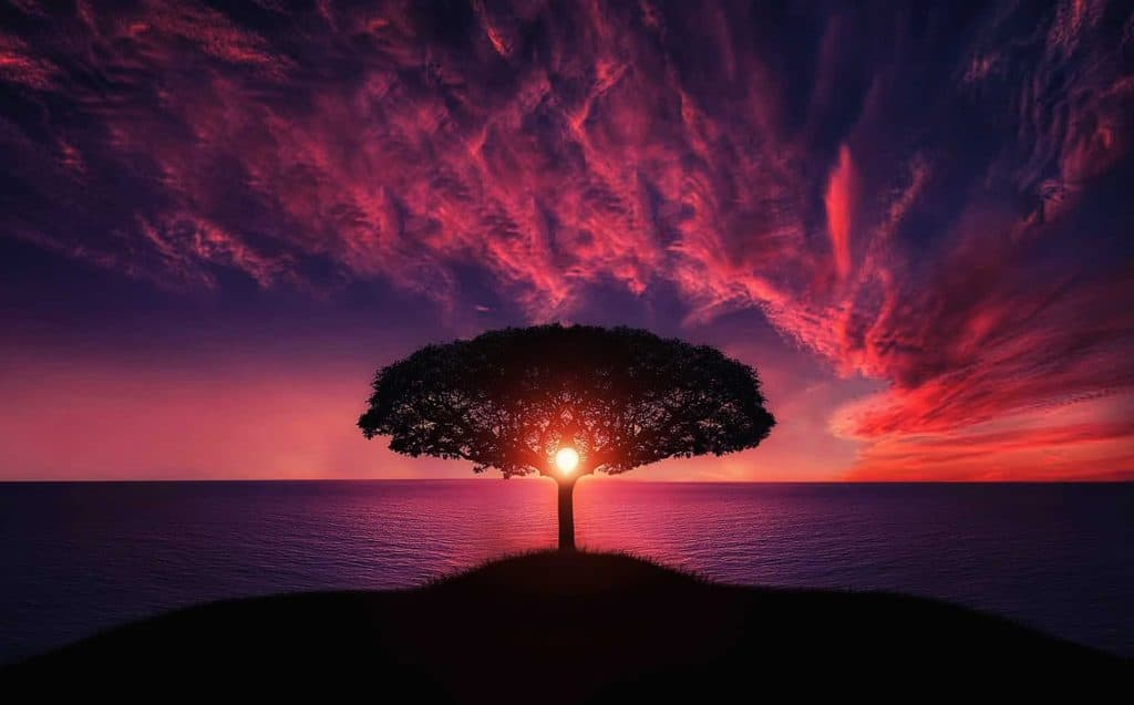 Many-branched tree in a colorful sunset